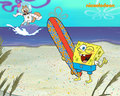 Spongebob &amp; Sandy - spongebob-squarepants wallpaper