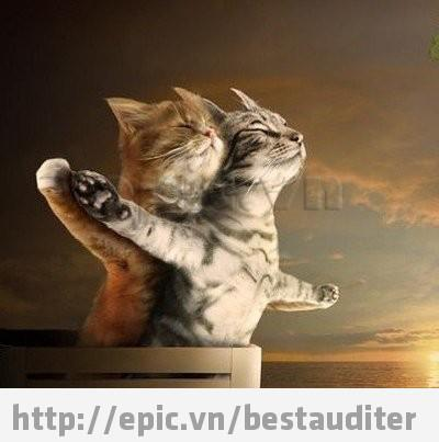 Titanic(Cat version)