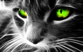 beautiful cat - beautiful-pictures wallpaper