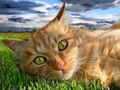 cat wallpaper - beautiful-pictures wallpaper