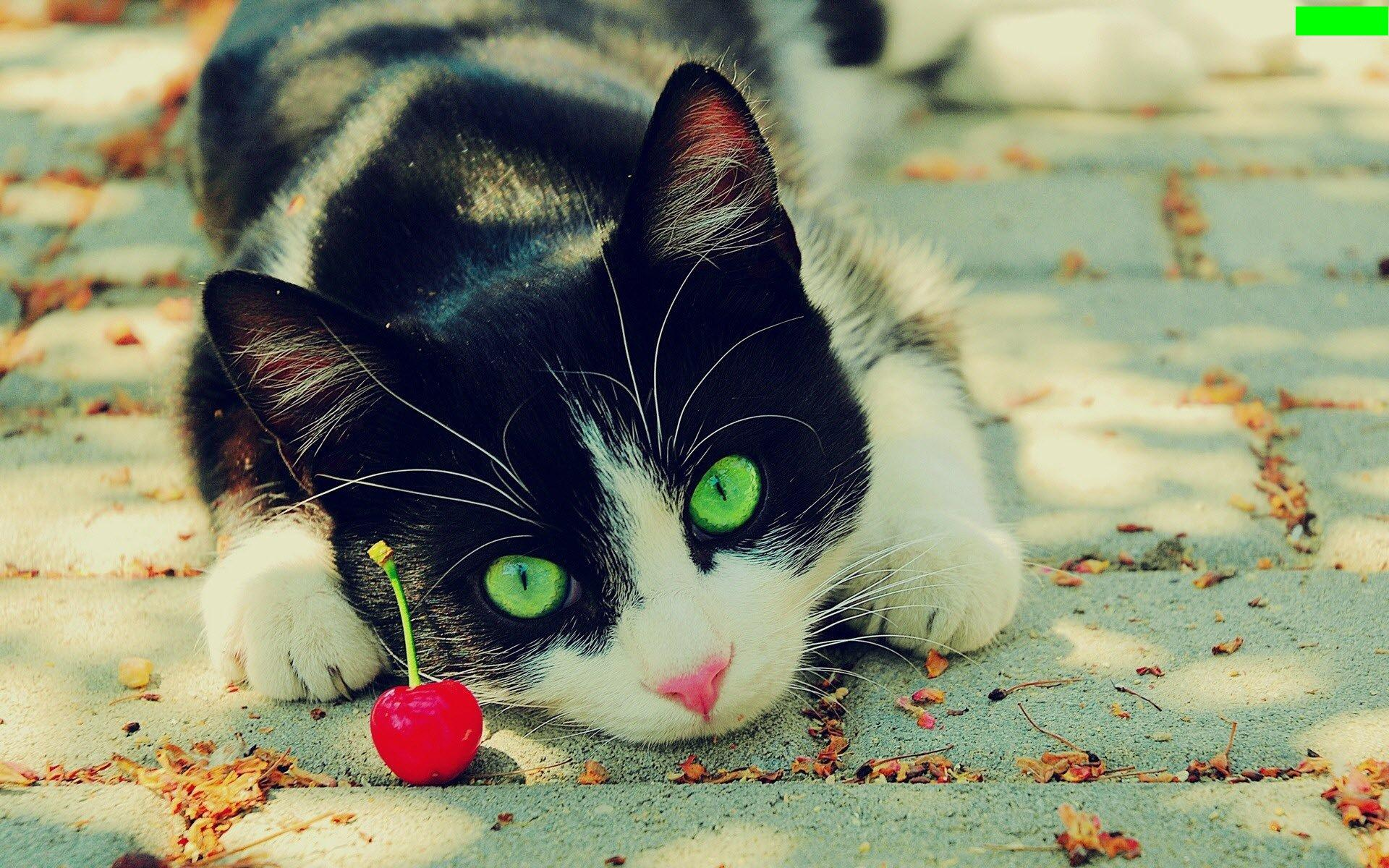 green-eyes-cat