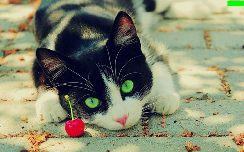 belas imagens wallpaper containing a tom, a kitten, and a cat called green-eyes-cat
