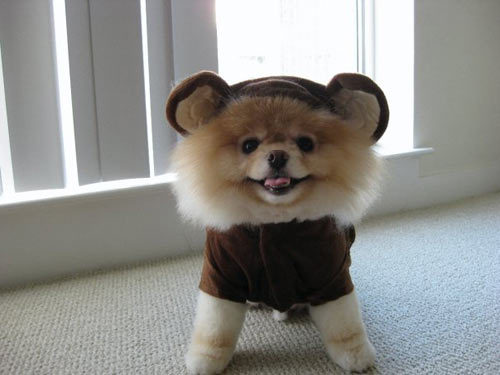 omg, i amor this dog, (Boo the dog)