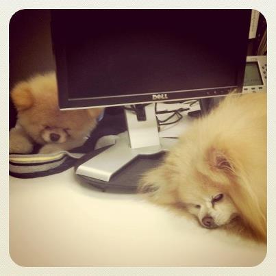 ♥Boo & Buddy♥