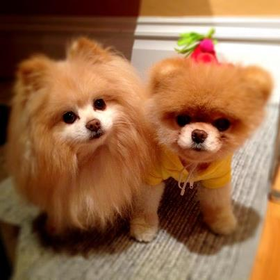 ♥Boo & Buddy♥ - boo-and-buddy Photo