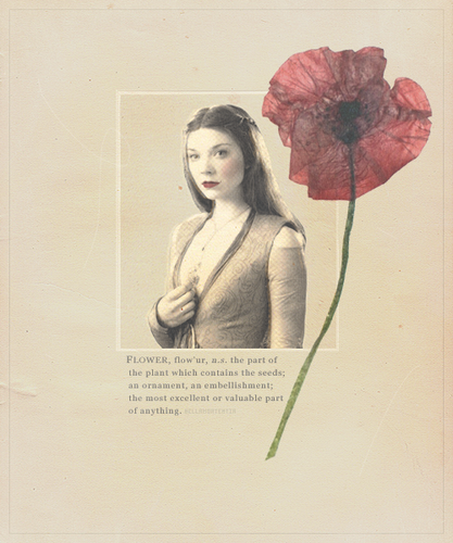 Margaery Tyrell wallpaper containing a bouquet, a hippeastrum, and a camellia titled  Margaery Tyrell