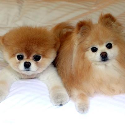Boo & Buddy <3