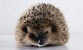 Charli (Charlie) the Hedgehog