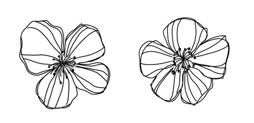 polyvore clippingg♥ wallpaper entitled Flowers Outline