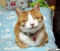 Funny Cat - jenjen_bunny photo