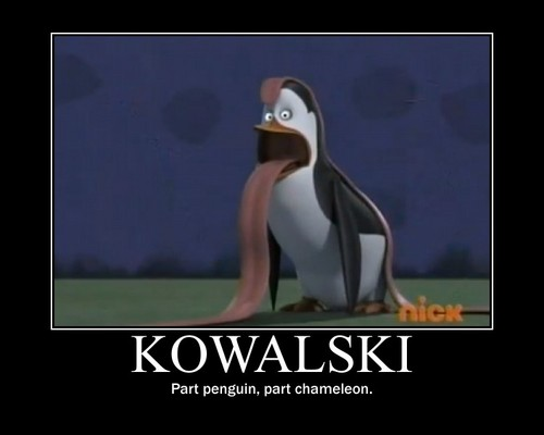Penguins of Madagascar پیپر وال called Kowalski