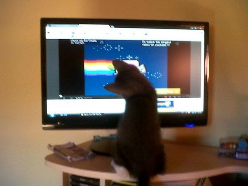 Lets Watch Nayn Cat  - nyan-cat Photo