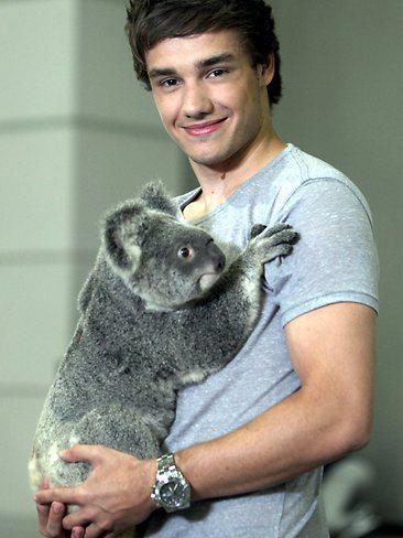 liam payne fondo de pantalla probably containing a koala entitled Liam Payne
