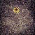 My Photography.. - photography photo