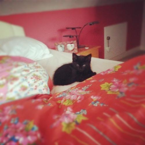 My new kitten Naya