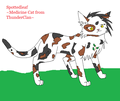 My version of Spottedleaf - warrior-cats photo