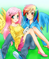 pelangi, rainbow Dash and Fluttershy