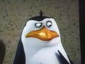 Rico - rico-the-penguin photo