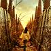 Sarah - labyrinth icon