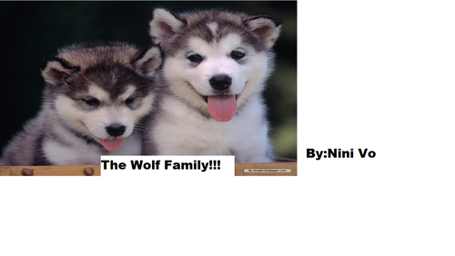 The Wolf Family - dogs Photo