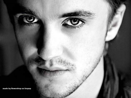 Tom Felton wallpaper containing a portrait entitled Tom Felton Wallpaper - Photoshoots