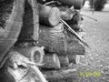 Wood pile - photography photo