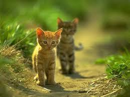 cute kitties