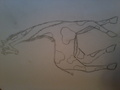 draw whit a giraffe - giraffes photo