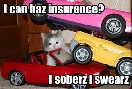 kitty need insurance