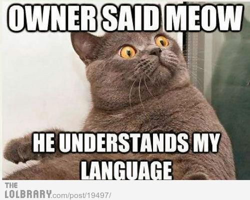 meow???