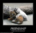 tiger buddies - tigers photo