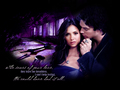"""The scars of your love"" - damon-and-elena wallpaper"