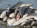 Against shark soup!!! - against-animal-cruelty photo