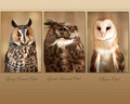 Animals Wallpaper - animals wallpaper