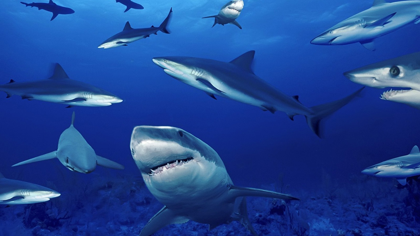 海洋污染下的动物
