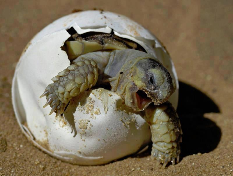 Baby Turtle - Animals Photo (31410915) - Fanpop