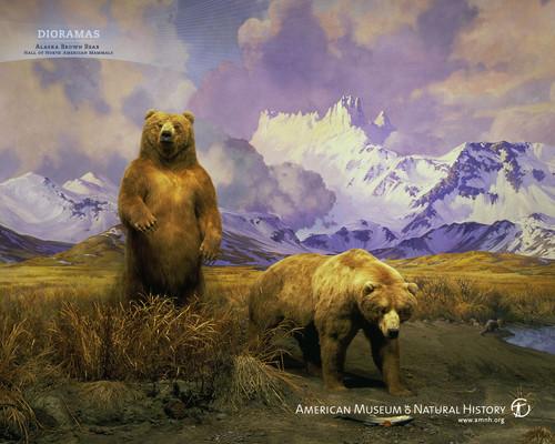 медведь Обои