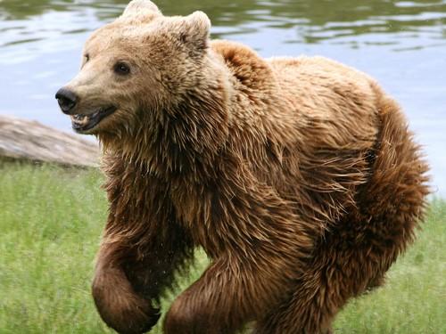 곰 바탕화면