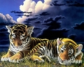 Big Cats For You Sis