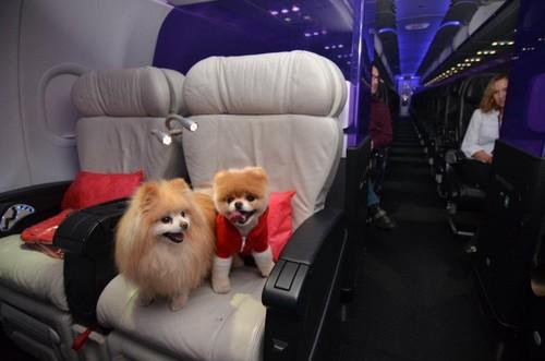 Boo & Buddy - Virgin America