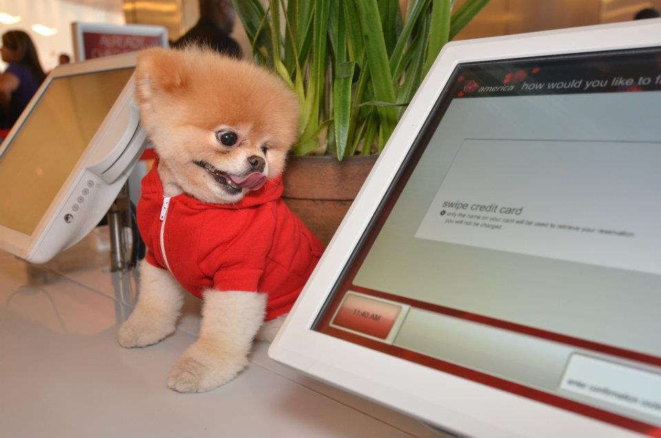 Virgin America Service Dog Policy