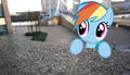 Dashie in real life