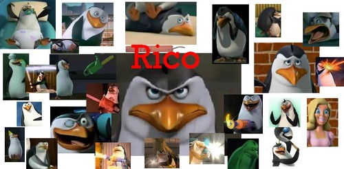 For All the Rico Fanguins :)