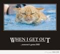 Funny  - cats photo