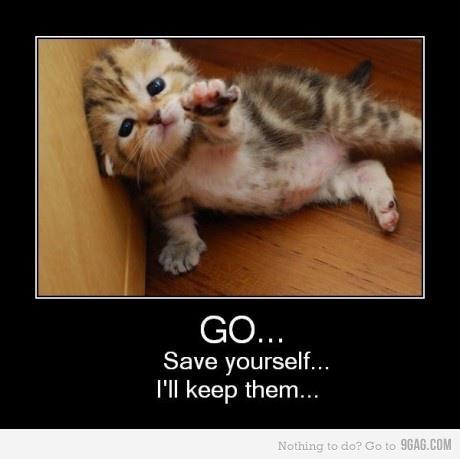 Funny - cats Photo