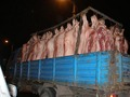 Killed Pigs - against-animal-cruelty photo