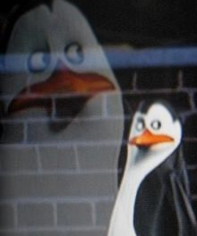 Kowalski   - penguins-of-madagascar Photo