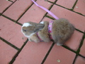 My REAL bunny Cookie