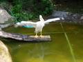 Pelican - photography photo
