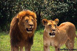 Real life Mufasa & Sarabi